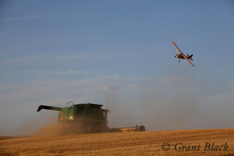 A light plane on an inspection of oil pipelines flies over the combine.