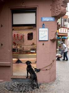 A DOG WAITS FOR ITS MASTER OUTSIDE A BUTCHER SHOP IN WERTHEIM, GERMANY